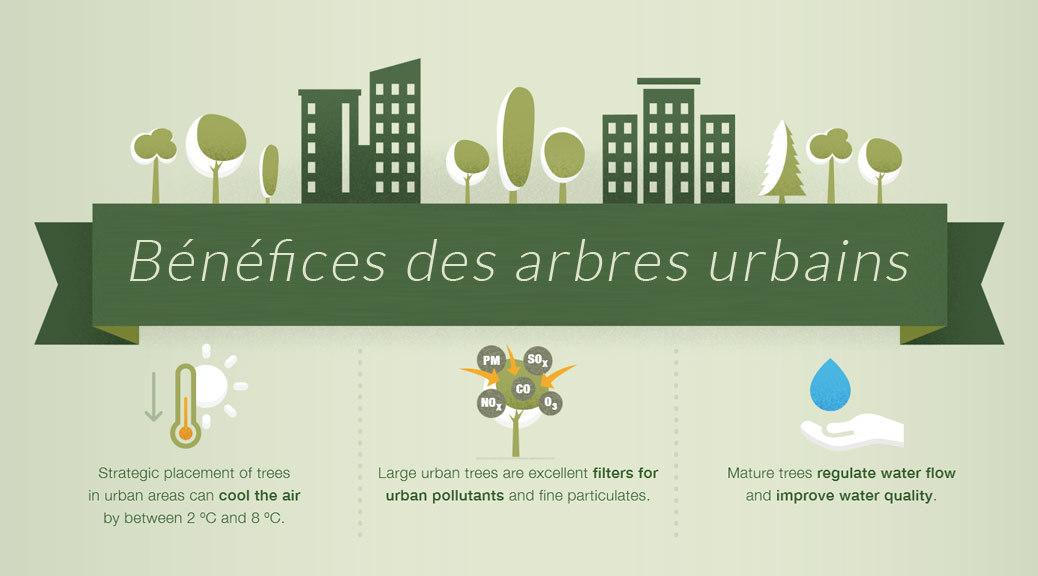 arbres urbains